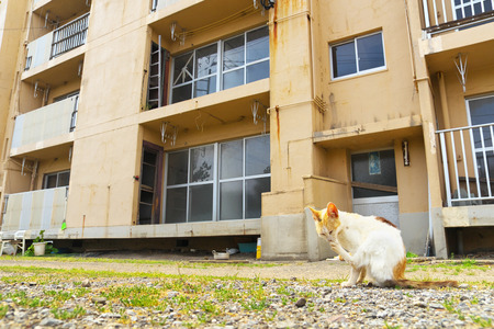 Ruined apartment building with a cat in Ikeshima, Nagasaki, Japan
