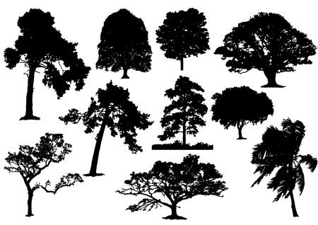 10 の黒い木のシルエットのないストローク