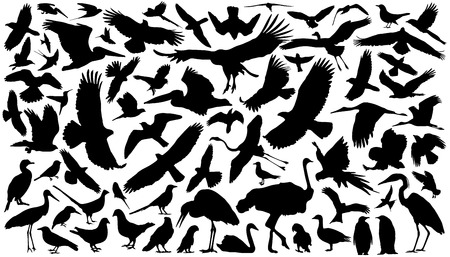 birds silhouettes on the white background Illustration