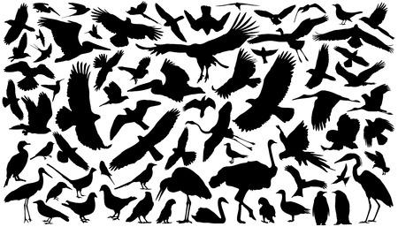 vogels silhouetten op de witte achtergrond