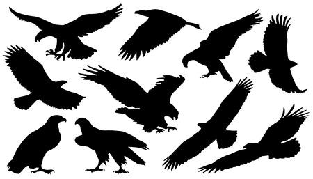 adelaar silouettes op de witte achtergrond Stock Illustratie