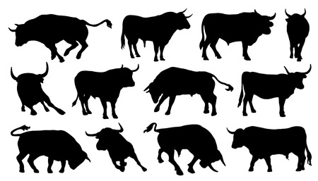 bull silhouettes on the white background Çizim