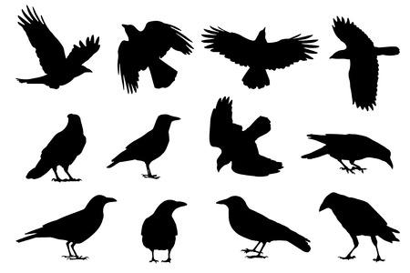 cuervo: siluetas de gallo en el fondo blanco Vectores