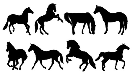 pony: horse silhouettes on the white background