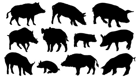 pig silhouettes on the white background