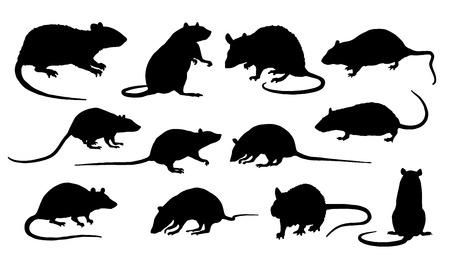 rata: siluetas de ratas en el fondo blanco