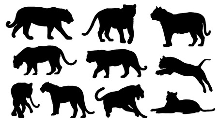 tiger silhouettes on the white background