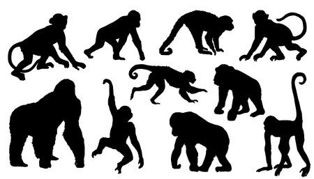 macaque: silhouettes de singes sur le fond blanc Illustration