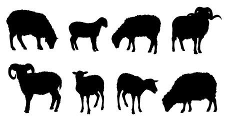 carnero: siluetas de ovejas en el fondo blanco Vectores