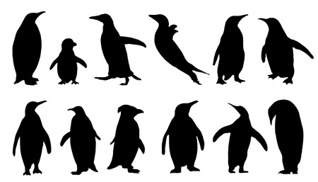 king penguins: penguin silhouettes on the white background