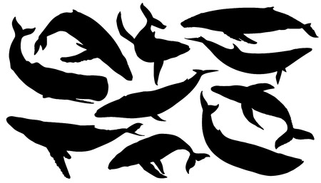 ballena: siluetas de ballenas en el fondo blanco Vectores