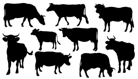 cows grazing: cow silhouettes on the white background Illustration