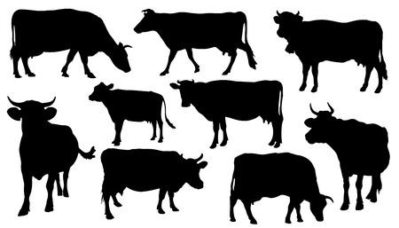 vaca: siluetas de vacas en el fondo blanco