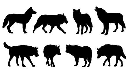 loup garou: silhouettes de loups sur le fond blanc Illustration