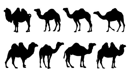 camel silhouettes on the white background Vector