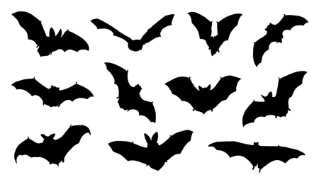 bat silhouettes on the white background