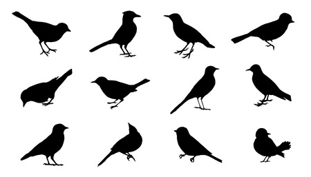 flock of birds: bird silhouettes on the white background