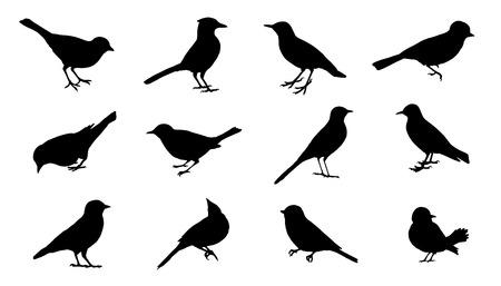 bandada pajaros: siluetas de aves en el fondo blanco