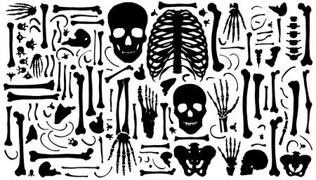 scheletro umano: sagome di osso su sfondo bianco