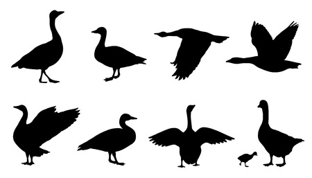 goose silhouettes on the white background Vettoriali
