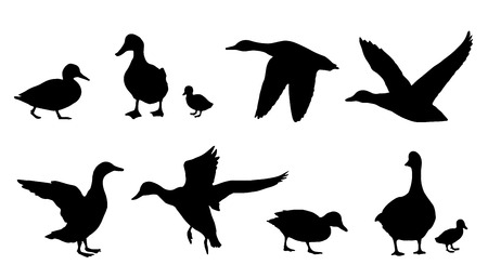 ocas: siluetas de patos en el fondo blanco