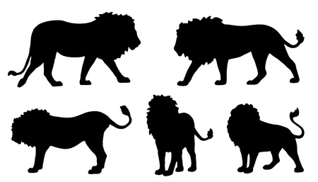 white lion: lion silhouettes on the white background