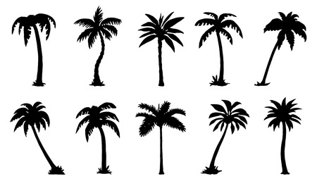tree trunks: palm silhouttes on the white background