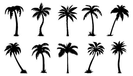 palmier: silhouttes palmiers sur le fond blanc Illustration