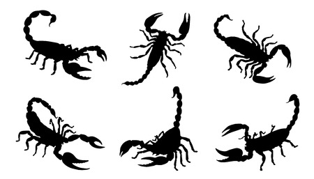 scorpion silhouettes on the white background