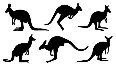 kangaroo silhouettes on the white background Vector