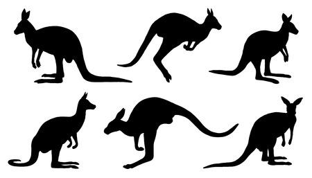 kangur sylwetki na białym tle