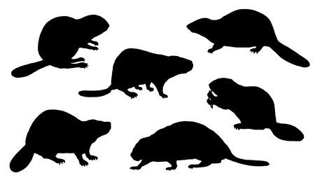 castor: siluetas de castor en el fondo blanco Vectores