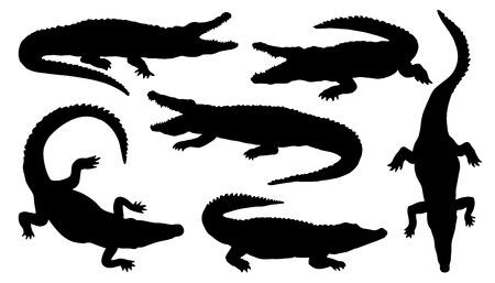 crocodile: siluetas de cocodrilo en el fondo blanco