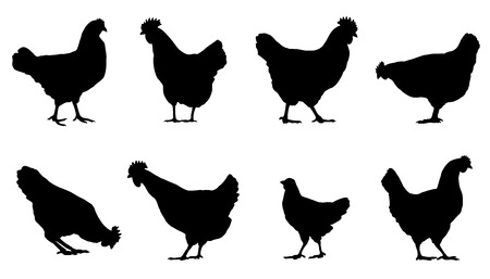chicken silhouettes on the white background