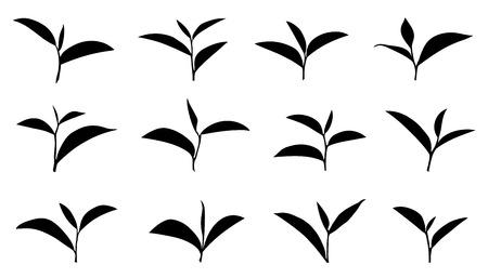 tea leaf on the white background
