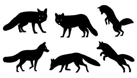 carnivores: fox silhouettes on the white background
