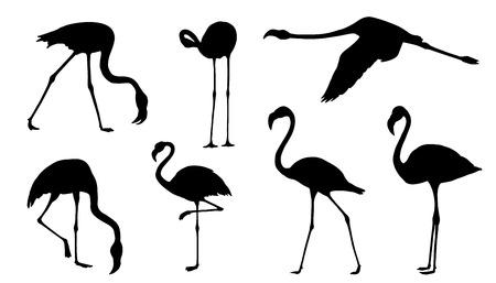 flamenco ave: siluetas de flamencos en el fondo blanco