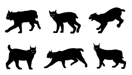 lynx silhouettes on the white background