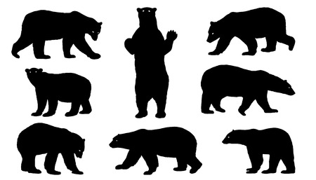 animal fauna: polar bear silhouettes on the white background Illustration