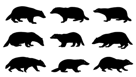 badger: badger silhouettes on the white background