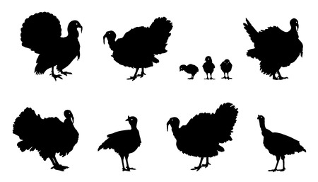 animal cock: tacchino sagome sullo sfondo bianco Vettoriali