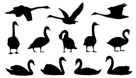 cisnes: siluetas de cisne en el fondo blanco Vectores