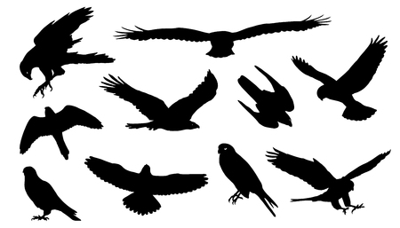halcón: siluetas de halcón en el fondo blanco
