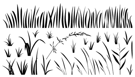 sedge: grass silhouettes on the white background
