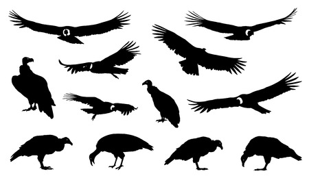 condor silhouettes on the white background Stock Illustratie