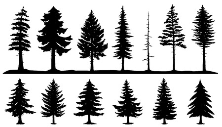 abetos: siluetas de árboles de coníferas en el fondo blanco