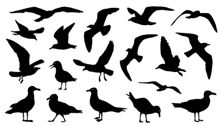 birds in flight: seagull silhouettes on the white background