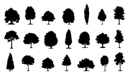 arbol alamo: Las siluetas de árboles en el fondo blanco