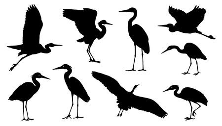 heron silhouettes on the white background