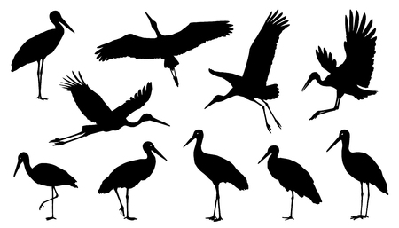 stork silhouette on the white background Çizim